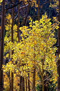 Aspen Vista Hike_101120-017
