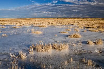 Winter Grassland - Frozen Spring
