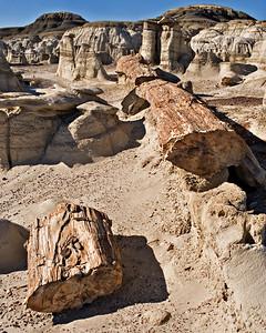 Petrified Log - Fruitland Formation