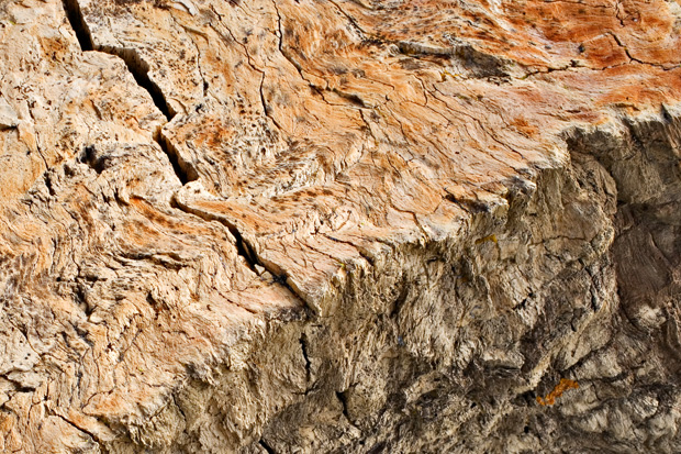 Details of petrified cypress-like conifer - tree stump in growth position - Fossil Forest - Fruitland Formation - 75 Mya
