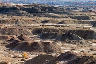 Fruitland coal and siltstones