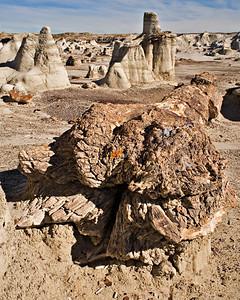 Petrified log base - Fruitland Formation