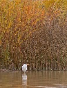 Egret - Fall 2004