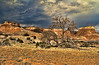 Ghost Ranch Landscape IV