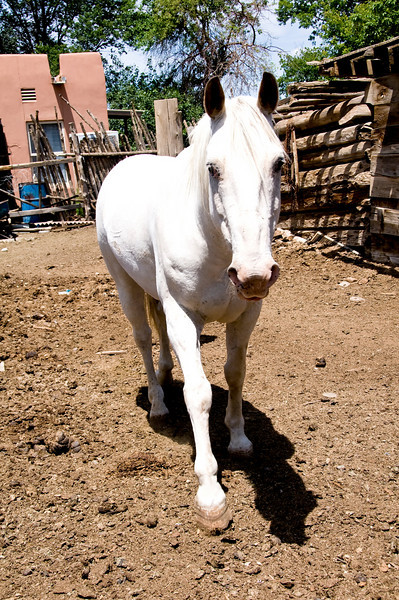 White Horse - Taos Pueblo, New Mexico.
