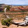 Juniper branch on Chimney Rock Mesa - Ghost Ranch, New Mexico.