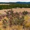 Cholla - Pecos National Historical Park, Pecos, New Mexico.