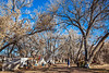 New Mexico - Battle of Valverde reenactment in 2012; army encampments along Rio Grande - 2-25-12-C1-0041 - 72 ppi