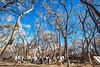 New Mexico - Battle of Valverde reenactment in 2012; army encampments along Rio Grande - 2-25-12-C1-0029 - 72 ppi