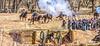 New Mexico - Battle of Valverde reenactment in 2012 - 2-25-12-C1-2 - 72 ppi-3