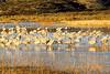 N nm bosque 5 - ORps - Bosque del Apache Nat'l Wildlife Refuge near Socorro, New Mexico - 72 dpi