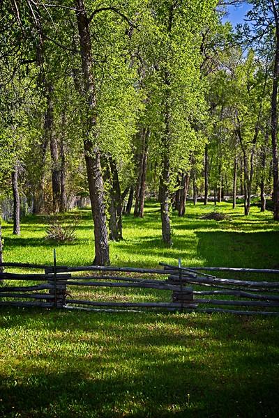 Rick's POTD - Forest Beauty