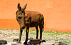 Donkeys and Burros