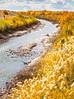 Bosque del Apache Nat'l Wildlife Refuge, New Mexico -0133 - 72 ppi - crop