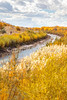 Bosque del Apache Nat'l Wildlife Refuge, New Mexico -0092 - 72 ppi