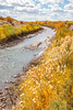 Bosque del Apache Nat'l Wildlife Refuge, New Mexico -0135 - 72 ppi