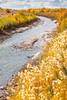 Bosque del Apache Nat'l Wildlife Refuge, New Mexico -0131 - 72 ppi
