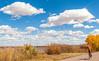 Bosque del Apache Nat'l Wildlife Refuge, New Mexico -0074 - 72 ppi - crop