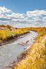 Bosque del Apache Nat'l Wildlife Refuge, New Mexico -0134 - 72 ppi