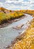 Bosque del Apache Nat'l Wildlife Refuge, New Mexico -0135 - 72 ppi - crop-2