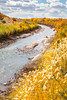 Bosque del Apache Nat'l Wildlife Refuge, New Mexico -0133 - 72 ppi