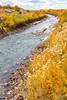 Bosque del Apache Nat'l Wildlife Refuge, New Mexico -0113 - 72 ppi