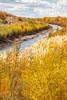 Bosque del Apache Nat'l Wildlife Refuge, New Mexico -0090 - 72 ppi