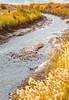 Bosque del Apache Nat'l Wildlife Refuge, New Mexico -0131 - 72 ppi - crop