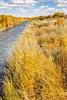 Bosque del Apache Nat'l Wildlife Refuge, New Mexico -0129 - 72 ppi
