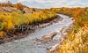Bosque del Apache Nat'l Wildlife Refuge, New Mexico -0110 - 72 ppi - crop