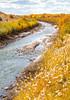 Bosque del Apache Nat'l Wildlife Refuge, New Mexico -0113 - 72 ppi - crop-2