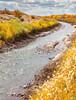 Bosque del Apache Nat'l Wildlife Refuge, New Mexico -0134 - 72 ppi - crop
