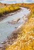 Bosque del Apache Nat'l Wildlife Refuge, New Mexico -0130 - 72 ppi