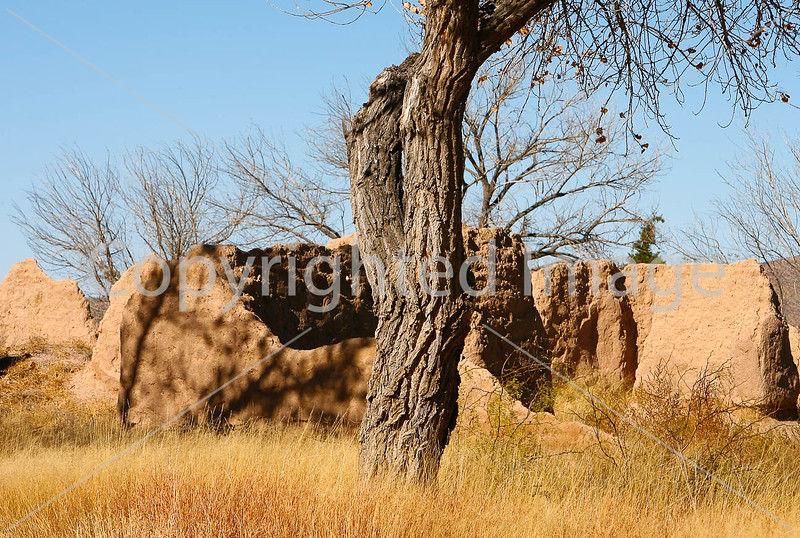 New Mexico - Fort Selden State Monument north of Las Cruces  - C8a-'08-0308 - 72 ppi