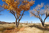 New Mexico - Fort Selden State Monument north of Las Cruces - C8b-'08-1317 - 72 ppi