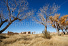 New Mexico - Fort Selden State Monument north of Las Cruces - C8b-'08-1322 - 72 ppi
