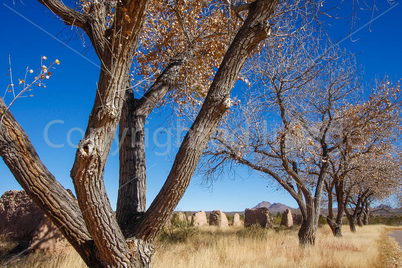 New Mexico - Fort Selden State Monument north of Las Cruces - C8b-'08-1361 - 72 ppi