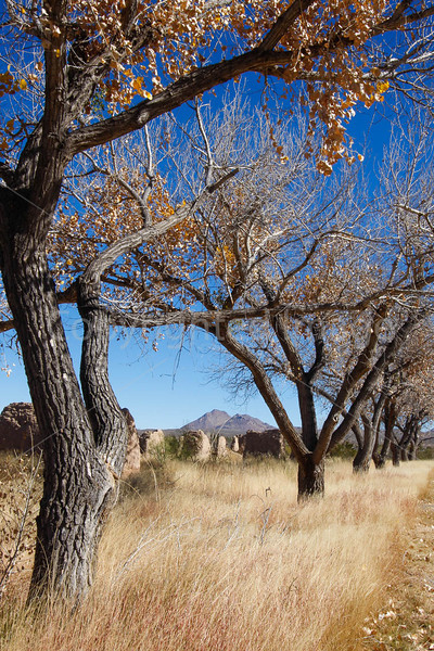 New Mexico - Fort Selden State Monument north of Las Cruces - C8b-'08-1357 - 72 ppi