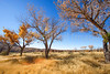 New Mexico - Fort Selden State Monument north of Las Cruces - C8b-'08-1314 - 72 ppi