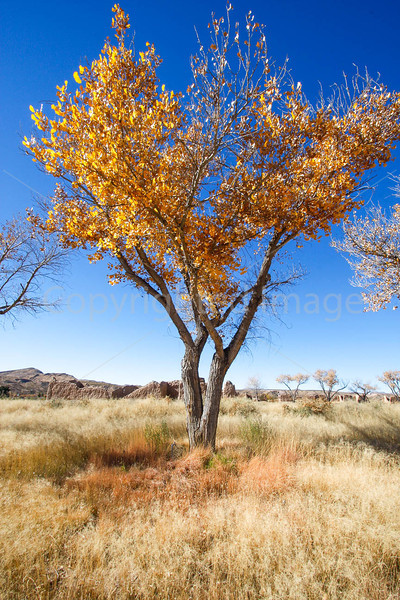 New Mexico - Fort Selden State Monument north of Las Cruces - C8b-'08-1315 - 72 ppi