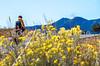 Cyclist on Santa Fe Trail near Pecos Nat'l Historical Park - D1-3 - C1-0087 - 72 ppi