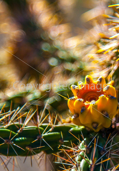 Cactus at Pecos National Historical Park, NM - D1-3 - C3-0183 - 72 ppi-2