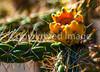 Cactus at Pecos National Historical Park, NM - D1-3 - C3-0183 - 72 ppi