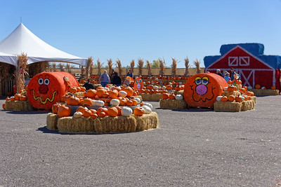 Pumpkin Patch_101119-006