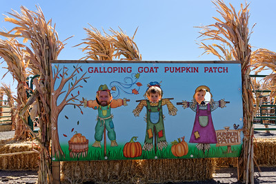 Pumpkin Patch_101119-024