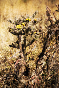 A Blooming Cholla Dragonfly Trail: Gila National Forest