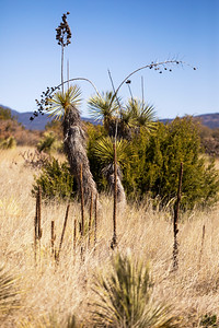 Dragonfly Trail: Gila National Forest