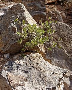 Sandia Cave-007
