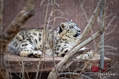 Zoo-028