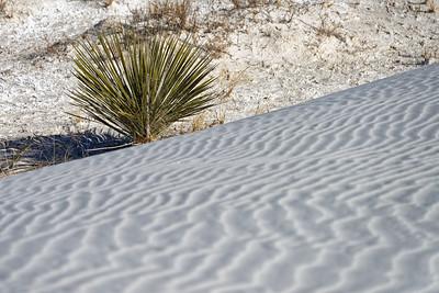 White Sands-015-2021